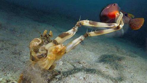 皮皮虾对人类有多致命?强壮的双钳,隔着渔网能咬碎人的骨头!