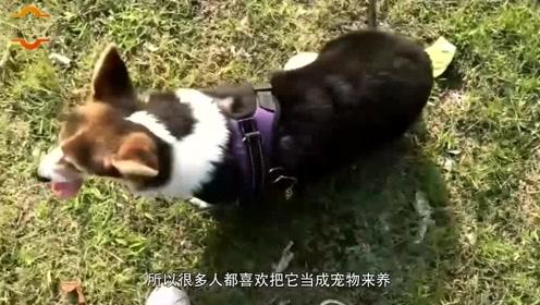 为什么狗不咬没见过面的自家人,狗是如何分辨的呢?看完茅塞顿开