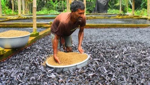印度大叔又开挂,上万条鱼丢进一个池塘,结果年入上百万!