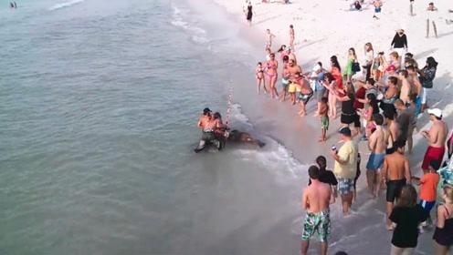 小伙海边钓到超级大鱼,拉近岸边瞬间,路人发出了尖叫声!