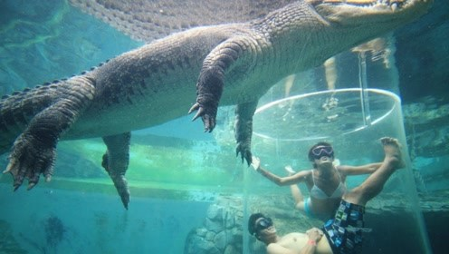 世界上最刺激的泳池,零距离接触鳄鱼,你敢挑战吗?