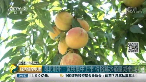 湖北荆州:黄桃集中上市 价格跳水销量减半
