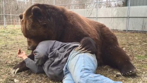 饲养员躺在棕熊怀里休息,棕熊突然躁动,朝饲养员的脖子一口下去