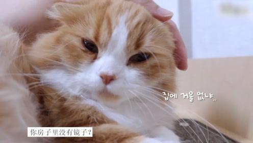 一时撸猫一时爽,一直撸猫一直爽,治愈减压萌宠视频