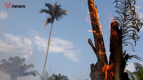 """连烧三周创纪录,巴西总统称亚马逊雨林大火为""""内政"""""""