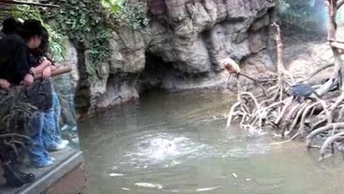 没想到猴子也有今天,欺负到水獭头上,这下被收拾惨了