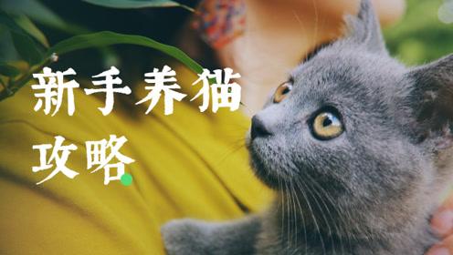 Vlog丨新建文件夹:新手养猫攻略