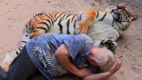 老虎抱着饲养员睡觉,醒来后,不料老虎翻脸,网友:本性难移