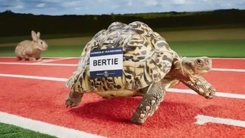 世界上跑最快的乌龟,速度和人类短跑冠军一样快!网友:我没看错