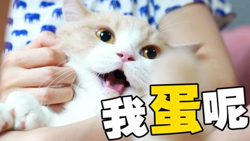 猫咪因巨蛋过于招摇惨遭绝育,心态崩塌!铲屎的:妈给你补个蛋