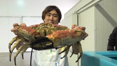 全球最大的螃蟹,小伙砸2万元专门去吃,吃完直说真是赚大发了