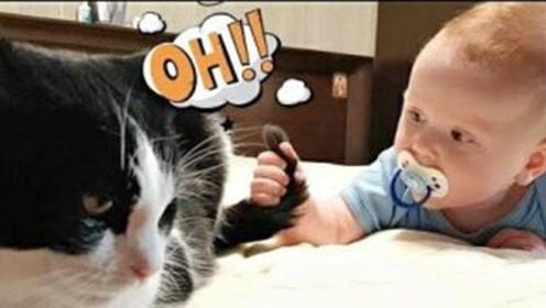猫咪在小主人面前一点都不傲娇,一人一猫玩得真欢乐!