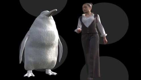 考古学家发现5600万年前巨型企鹅 身高1米6很强壮