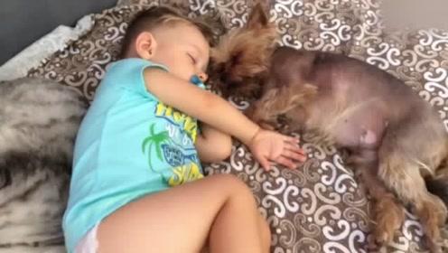 小宝宝与猫猫狗狗睡在一起,画面太暖了