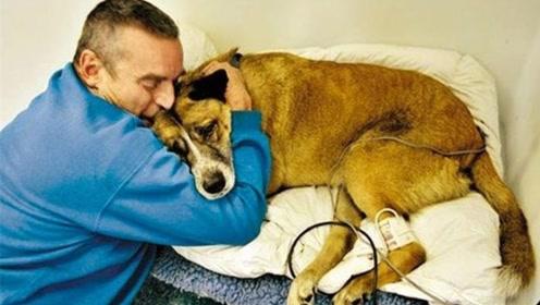 为什么狗狗在临死前,都会独自离开家?背后原因让人心酸