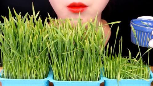 月末了小姐姐饿的只能吃草!吃一口满嘴绿汁,吃的真过瘾
