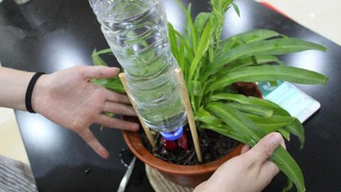 教你自制浇花神器,一个月不浇水花,照样开的美