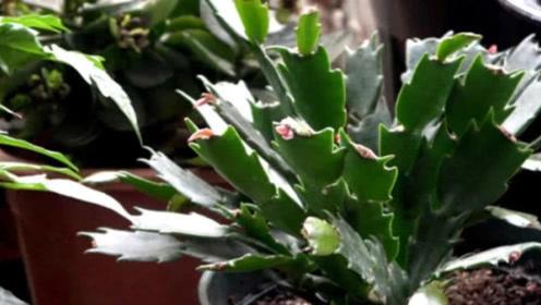 一个小妙招教你救活植物,植物新手快学起来