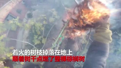 砍树有风险:电锯与棕榈树树枝摩擦起火,伐木工差点引火烧身