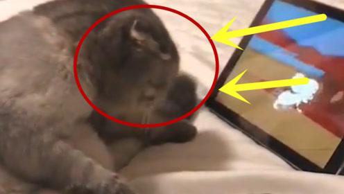 猫看平板竟然当真了,老鼠再近一点,差点就钻进屏幕里了!