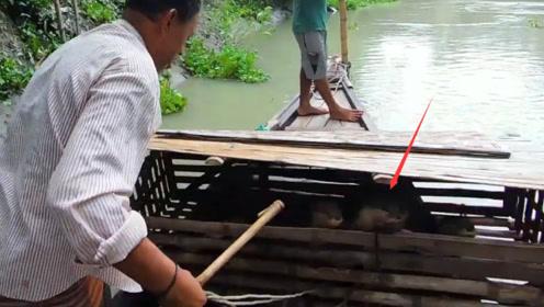 """传说中的""""水猴子"""",被渔民训练用来抓鱼,结果闪到我了!"""