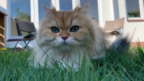 这猫咪实在是太阔爱了,让人无法拒绝猫咪的诱惑,你觉得呢