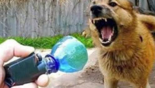 """小伙研发""""驱狗""""神器,轻轻按下开关,周围恶犬瞬间消失"""