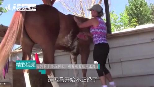 """女饲养员给马刷毛,刷着刷着就开始不正""""经""""了,众人笑翻!"""