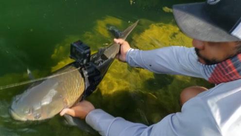 男子为鱼装摄像头,鱼眼观水下世界有多独特?网友:有点亏