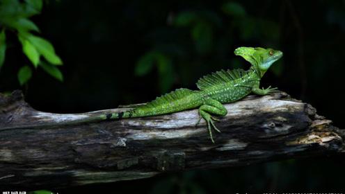 热带雨林中的轻功高手,死里逃生全靠一手轻功水上漂