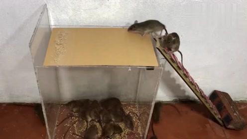 这样的灭鼠陷阱一出,老鼠全家没有一点活路,看完赶紧做一个!