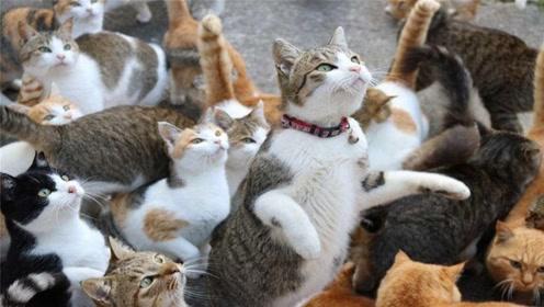 """日本有一座猫岛,是爱猫人士的""""天堂"""",岛上的猫比人还多"""