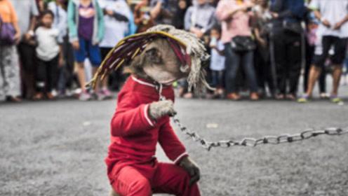 """印尼街头惊现""""怪童"""",身体被铁链锁住,得知真相游客心酸了!"""