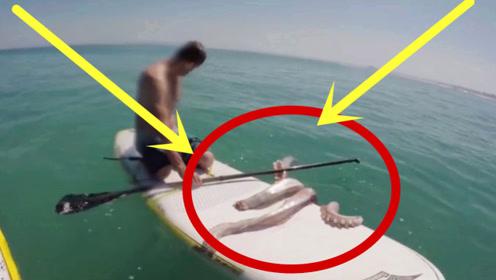 男子出海冲浪,被一只巨型鱿鱼缠上,反手一把抓住!