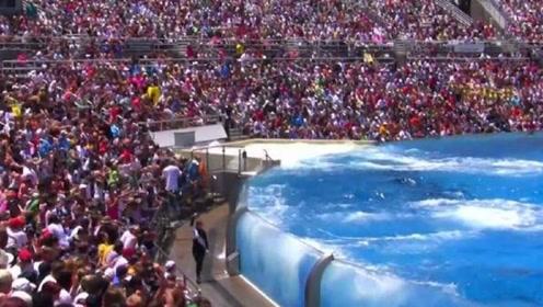 虎鲸表演完美落幕,饲养员没给小鱼干,台下的观众遭殃了