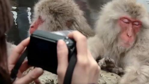 这群猴子成精了,独自霸占一处温泉!泡澡姿势超销魂