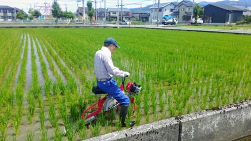 """日本发明""""骑马式""""水稻开沟机,一天开沟8亩地,500元造一台"""