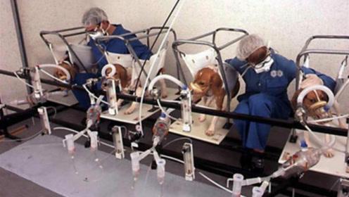 为证明香烟无害,科学家拿狗做实验,一天吸100支香烟连续3年