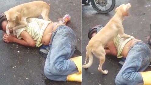 男子醉倒街头,狗狗:谁过来我揍谁!警察也不让碰!
