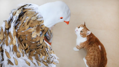 女主人买1000根鸡毛插身上逗猫,装扮鸽子王,猫:本色出演!