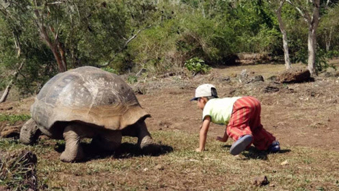 """英国神龟出生于16世纪,送""""走""""了九位主人,你敢尝试吗?"""