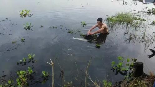 男子下水抄大鱼,精疲力尽的大鱼没扑腾几下就进网了