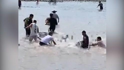 好嗨哟!受台风影响温州乐清湾现大量淡水鱼 大批村民前来捕鱼
