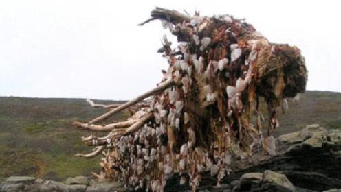 """海上漂来一根""""烂木头"""",游客急忙避让,却让老渔民发了大财"""