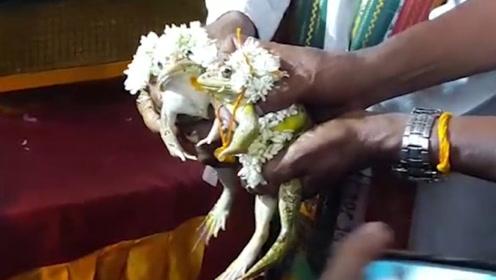 印度求雨为两只青蛙举办婚礼,雨水泛滥后,不得已又强行离婚!