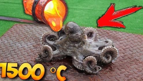 男子将岩浆浇在章鱼身上,会怎么样呢?章鱼:我真是谢谢你
