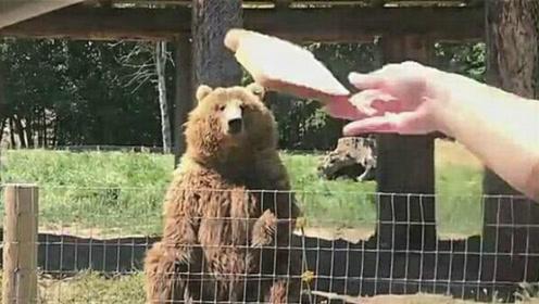 游客扔了一片面包,棕熊瞬间接住,棕熊:基本操作,不用崇拜我