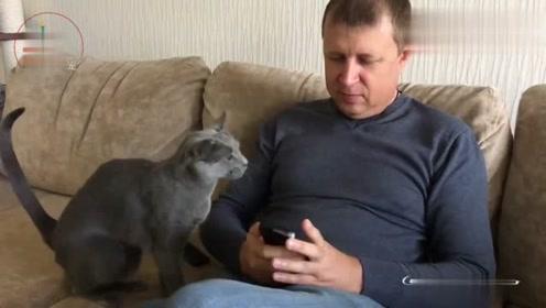 一只强迫主人撸的猫,不撸都不行,真是个磨人的小妖精