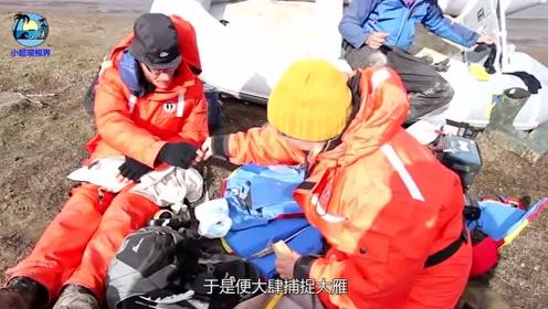 怒!中国大雁为何越来越少,并非环境影响,而是大雁半路被劫杀