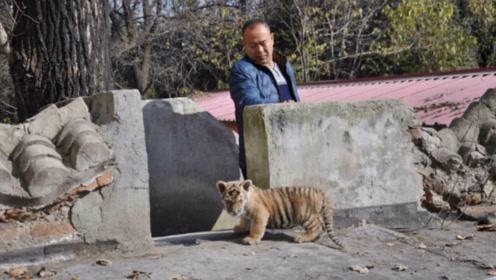 男子抚养虎宝宝,养大成年后,老虎竟然是这样的反应!